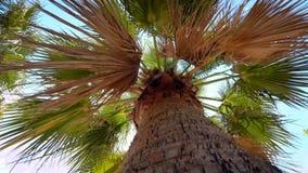 el vídeo 4k de la palmera se va contra el cielo azul en día ventoso soleado almacen de metraje de vídeo