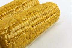 El vacío selló las mazorcas de maíz frescas para el vide sous que cocinaba el recorte en blanco imagen de archivo