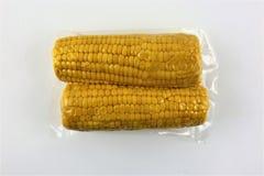 El vacío selló las mazorcas de maíz frescas para el vide sous que cocinaba el recorte en blanco imagen de archivo libre de regalías