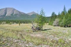 El valle amplio entre las montañas. Imagen de archivo libre de regalías