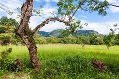 El Valle de Anton i Panama arkivbild