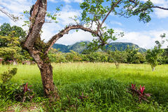 El Valle de Anton in Panama. El Valle is considered one of the most beautiful places in Panama Stock Photography