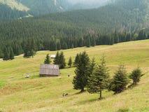 El valle de Kalatowki, Zakopane, Polonia Imagen de archivo libre de regalías