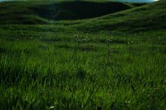 El valle de la milenrama Fotos de archivo