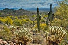 El valle de los cactus de Sonoran Imagenes de archivo