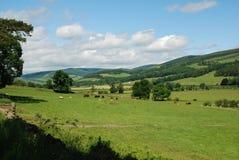 El valle del tweed cerca de Traquair en Peebleshire fotografía de archivo