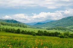 El valle verde alto en las montañas con vistas al cielo claro en día de verano spangled con el paisaje floreciente del verano de  foto de archivo libre de regalías
