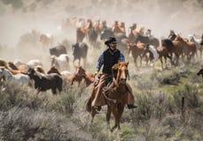 El vaquero con el sombrero negro y el caballo principal del caballo del alazán reúne en un galope Imagenes de archivo