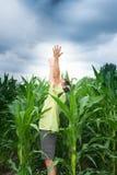 El varón adulto goza de él comienza a llover sobre cadena del maíz fotos de archivo