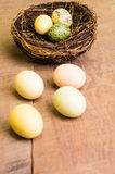 El vector de madera con los pájaros jerarquiza y los huevos verticales Imagenes de archivo