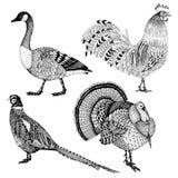 El vector dibujado mano fijó con cuatro pájaros abstractos de la granja Foto de archivo libre de regalías