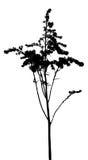 El vector planta siluetas Imágenes de archivo libres de regalías