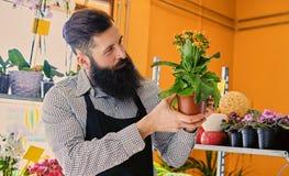 El vendedor barbudo de la flor sostiene las flores en un pote en un jardín marcha fotos de archivo libres de regalías