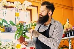 El vendedor barbudo de la flor sostiene las flores en un pote en un jardín marcha fotos de archivo