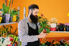 El vendedor barbudo de la flor sostiene las flores en un pote en un jardín marcha foto de archivo libre de regalías
