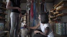 El vendedor corrige la decoración en el perro esquimal almacen de video