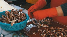 El vendedor de los pescados limpia y cortando pescados frescos en mercado de pescados metrajes