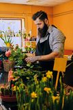 El vendedor elegante barbudo de la flor sostiene rosas rosadas en un mercado s imagenes de archivo