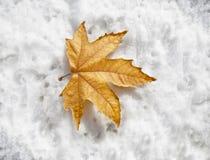 El venir del invierno Fotos de archivo libres de regalías