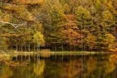 El venir del otoño Foto de archivo