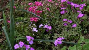 El verano apacible florece la floración en la cama de flor almacen de metraje de vídeo