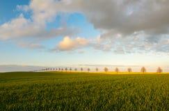 El verano coloca, madurando campos de la cosecha de grano en Alemania Foto de archivo