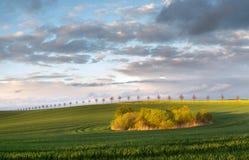 El verano coloca, madurando campos de la cosecha de grano en Alemania Imagenes de archivo