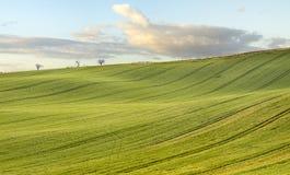 El verano coloca, madurando campos de la cosecha de grano en Alemania Fotos de archivo libres de regalías