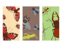 El verano colorido del detalle del ala de la fauna de los icards de los insectos fastidia el ejemplo salvaje del vector ilustración del vector