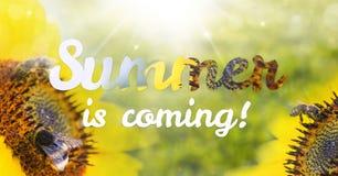 El verano de las letras está viniendo con los girasoles Imagen de archivo libre de regalías