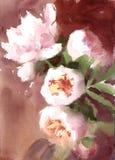 El verano de las peonías de la acuarela florece el ejemplo floral pintado a mano de la boda de la tarjeta de felicitación Fotos de archivo libres de regalías