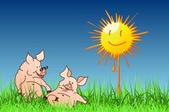 El verano del cerdo Foto de archivo libre de regalías