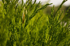 El verano del color verde deja el fondo de las hojas del verde de los árboles Foto de archivo