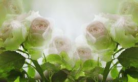 El verano floral white-pink=green el fondo hermoso Un ramo blando de rosas rosas claras con verde se va en el tronco después de t foto de archivo