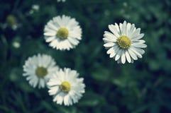 El verano florece con los colores blancos y el fondo verde Fotos de archivo