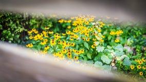 El verano florece la bandera Flores amarillas bajo luz del sol, primer floreciente cambiante feliz fotos de archivo