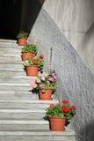 El verano hermoso florece en plantadores en las escaleras concretas Fotografía de archivo