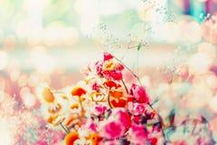 El verano o la primavera florece en el fondo soleado del bokeh Imágenes de archivo libres de regalías