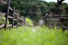El verano salvaje floreciente florece dentro de la granja del corral rural Fotografía de archivo libre de regalías