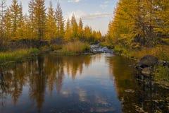 El verano y la caída ajardinan con el bosque, cielo nublado, río Imagenes de archivo