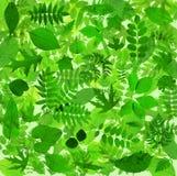 El verde abstracto deja el fondo Fotos de archivo