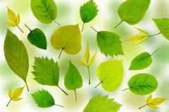 El verde abstracto deja el fondo Imagen de archivo libre de regalías