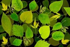 El verde abstracto deja el fondo Imagenes de archivo