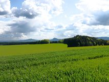 El verde coloca el bosque Alemania de las plantas de la naturaleza del sol del verano Imagenes de archivo