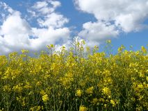 El verde coloca el bosque Alemania de las plantas de la naturaleza del sol del verano Imagen de archivo libre de regalías