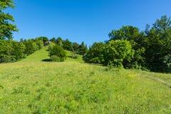 El verde de Forest Field Grassy Summer Day florece la montaña que camina el Exp fotos de archivo libres de regalías