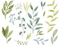 El verde de la acuarela deja la colección determinada libre illustration