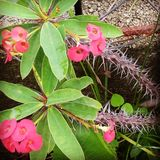 El verde de la flor de la naturaleza libera imagen de archivo