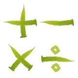 El verde de la marca del carácter deja el helecho aislado Fotografía de archivo libre de regalías