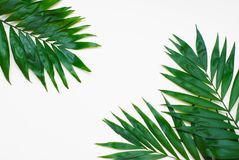 El verde de la palma deja el árbol exótico tropical Isoalted en el fondo blanco Holliday Patern Template fotos de archivo
